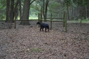Trees at dancin dogs boarding kennel
