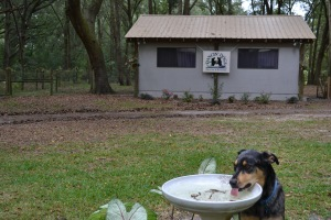 pet care services at a kennel near gainesville florida